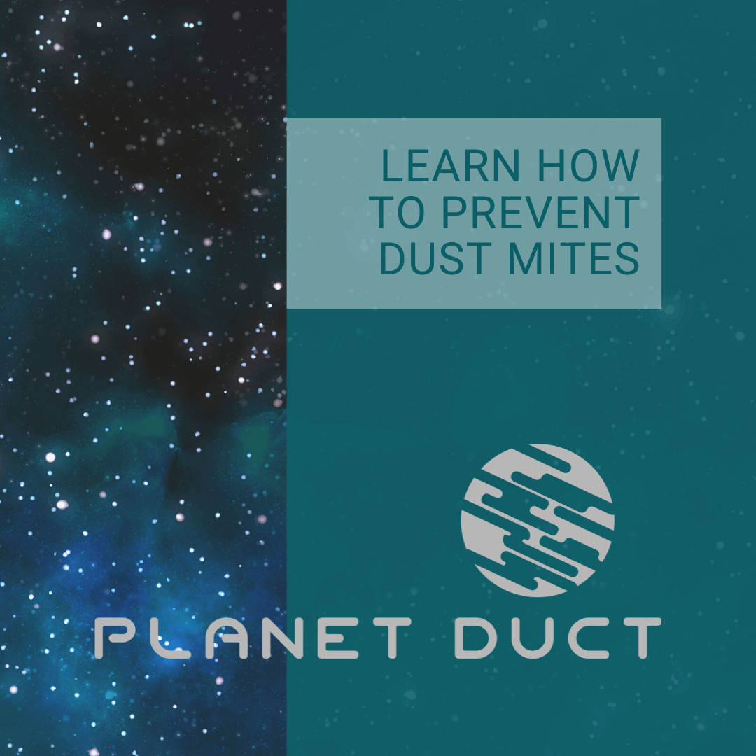 """A green and blue graphic with the words, """"Learn How To Prevent Dust Mites."""""""